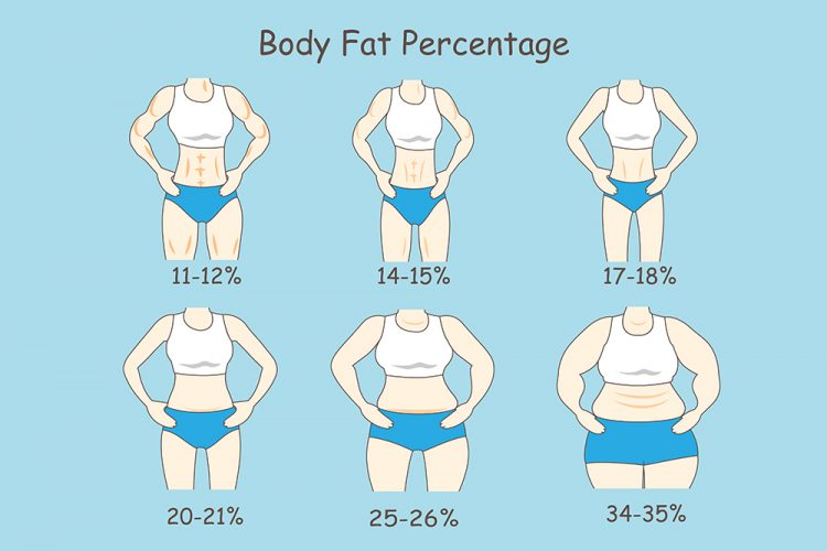 body fat percentage examples